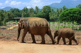 SRI LANKA, Pinnewala Elephant Orphanage, adult elephant and baby, SLK2313JPL
