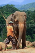 SRI LANKA, Pinnewala Elephant Orphanage, adult elephant and mahout, SLK2314JPL