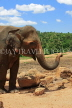 SRI LANKA, Pinnewala Elephant Orphanage, adult elephant closeup, SLK2308JPL