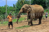 SRI LANKA, Pinnewala Elephant Orphanage, elephant and mahout, SLK2374JPL