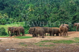 SRI LANKA, Pinnewala Elephant Orphanage, elephant herd freely roaming, SLK2400JPL