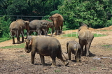 SRI LANKA, Pinnewala Elephant Orphanage, elephant herd with baby, SLK2370JPL
