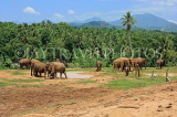 SRI LANKA, Pinnewala Elephant Orphanage, elephant roaming freely, SLK2414JPL