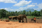 SRI LANKA, Pinnewala Elephant Orphanage, elephants and mahout, SLK2295JPL