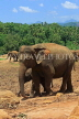 SRI LANKA, Pinnewala Elephant Orphanage, elephants roaming, SLK2293JPL