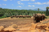 SRI LANKA, Pinnewala Elephant Orphanage, elephants roaming freely, SLK2290JPL