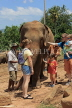 SRI LANKA, Pinnewala Elephant Orphanage, tourists petting adult elephant, SLK2384JPL
