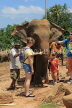 SRI LANKA, Pinnewala Elephant Orphanage, tourists petting adult elephant, SLK2385JPL
