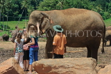 SRI LANKA, Pinnewala Elephant Orphanage, tourists petting elephant, SLK2375JPL