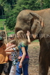 SRI LANKA, Pinnewala Elephant Orphanage, tourists petting elephant, SLK2377JPL