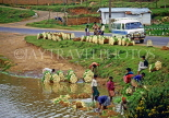 SRI LANKA, hill country, Nuwara Eliya, farmers washing vegetables for transportation, SLK2082JPL