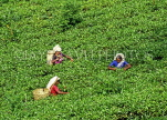 SRI LANKA, hill country, Tea plantation and workers (near Nuwara Eliya), SLK2128JPL