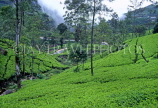 SRI LANKA, hill country, Tea plantation near Nuwara Eliya, SLK1509JPL