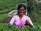 SRI LANKA, hill country, Tea plucker (near Nuwara Eliya), SLK148JPL