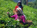 SRI LANKA, hill country, Tea pluckers (near Nuwara Eliya), SLK275JPL