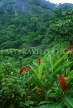 SRI LANKA, hill country, jungle scenery, red Ginger Lily flowers, SLK260JPL