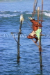SRI LANKA, south coast, Ahangama area, Stilt Fisherman, SLK4770JPL