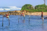 SRI LANKA, south coast, Ahangama area, Stilt Fishermen, SLK4769JPL
