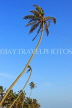 SRI LANKA, south coast, Ahangama area, leaning coconut trees, SLK4747JPL