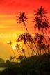 SRI LANKA, south coast, Ahangama area, sunset with coconut trees in silhouette, SLK4754JPL