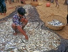 SRI LANKA, south coast, Ambalangoda, fisherman sorting catch (hauled in by nets), SLK3275JPL