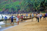 SRI LANKA, south coast, Ambalangoda, fishermen hauling in nets, SLK1675JPL