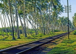 SRI LANKA, south coast, Bentota, railway line and coconut trees, SLK2064JPL