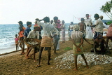 SRI LANKA, south coast, Beruwela, fishermen sorting out their catch, SLK1702JPL