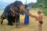 SRI LANKA, west coast, boy (tourist) feeding elephant, SLK1714JPL