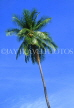 ST LUCIA, Morne Fortune, coconut tree against blue sky, STL733JPL