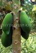 ST LUCIA, Papaya fruit, STL726JPL
