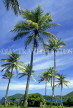 ST LUCIA, Pigeon Point Island, coconut trees, STL722JPL
