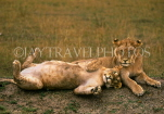 TANZANIA, Ngorongoro Crater, young male and femal lions, TAN670JPL