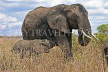 TANZANIA, Serengeti National Park, Elephant and calf, TAN823JPL
