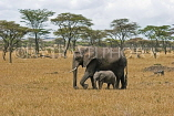 TANZANIA, Serengeti National Park, Elephant and calf, TAN825JPL