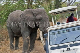 TANZANIA, Serengeti National Park, bull Elephant by safari jeep, TAN816JPL