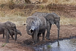 TANZANIA, Tarangire National Park, family of Elephants at a waterhole, TAN851JPL