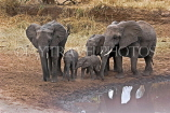TANZANIA, Tarangire National Park, family of Elephants at a waterhole, TAN852JPL