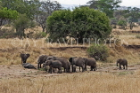 TANZANIA, Tarangire National Park, herd of Elephant, TAN853JPL