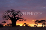 TANZANIA, Tarangire National Park, sunset and Baobab tree, TAN855JPL