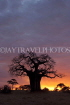 TANZANIA, Tarangire National Park, sunset and Baobab tree, TAN856JPL
