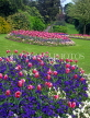 UK, Avon, BATH, Royal Victoria Park, Tulip beds, BAT311JPL