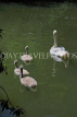UK, LONDON, Battersea Park, lakeside, swan with cygnets, UK10175JPL