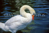 UK, LONDON, Hyde Park, Italian Water Gardens, Swan, UK9016JPL