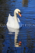 UK, LONDON, Hyde Park, Serpentine lake, Swan, UK227613JPL