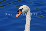 UK, LONDON, Hyde Park, The Serpentine lake and swan, closeup, UK10077JPL