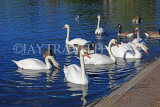UK, LONDON, Kensington Gardens, Round Pond, Swans and Ducks swimming, UK1077JPL