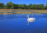UK, LONDON, Kensington Gardens, Round Pond, and swan swimming, UK9097JPL