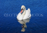 UK, LONDON, Kensington Gardens, Round Pond, and swan swimming, UK9100JPL