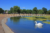 UK, LONDON, Kensington Gardens, Round Pond, and swan swimming, UK9101JPL
